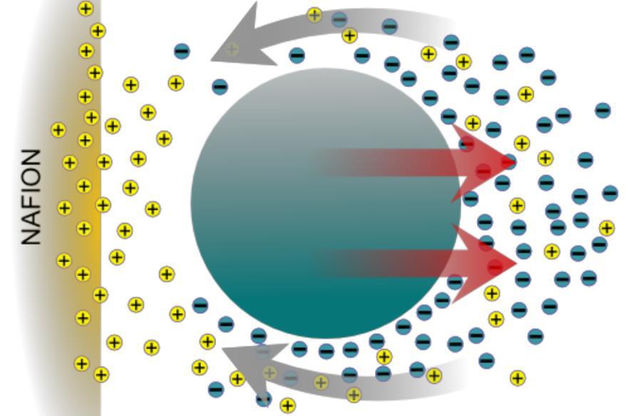 Рисунок 2. Иллюстрация механизма, спомощью которого диффузиофорез генерирует ток, направленный напластичные микросферы, что ведёт кобразованию зоны исключения. (Schurr, 2013; Florea et al., 2014a).