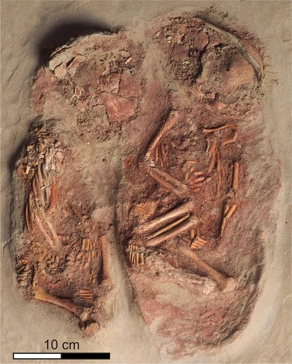 Захоронение каменного века со скелетными останками двух младенцев, оказавшихся близнецами.
