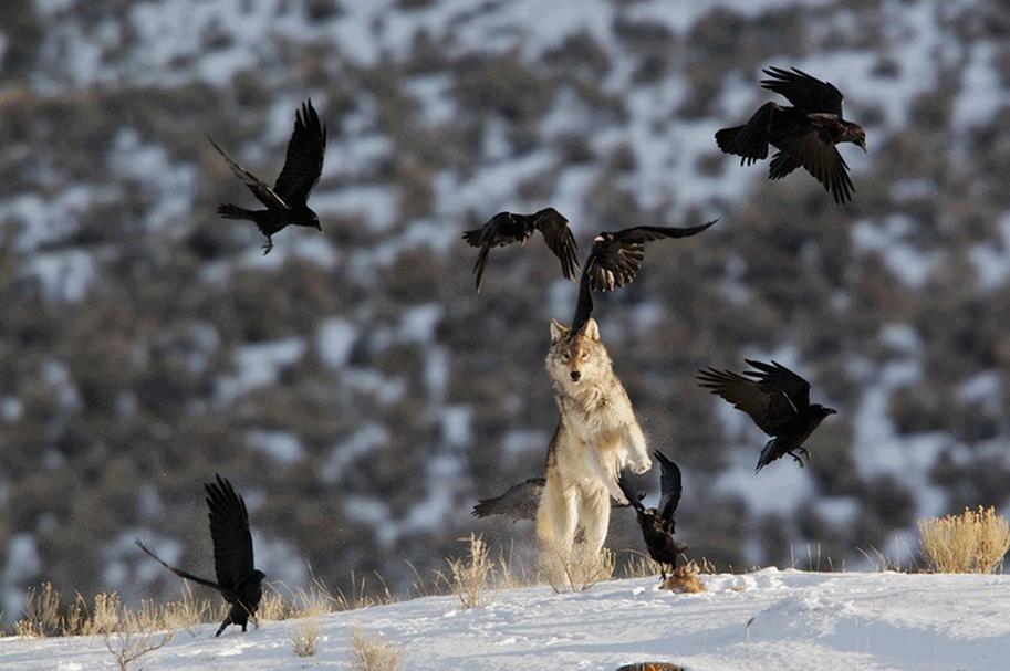 Взаимодействие между видами может значительно повлиять наэкосистему.