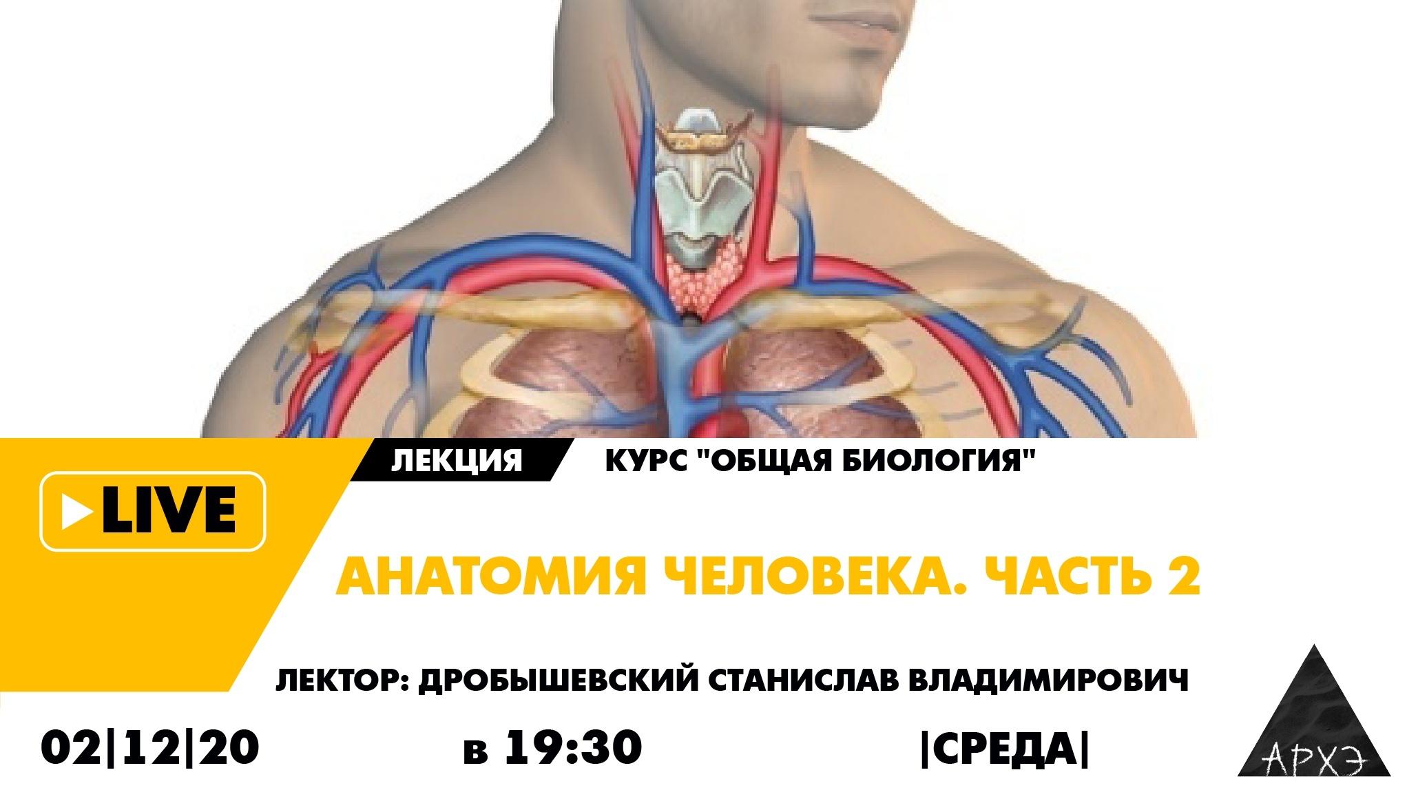 Анатомия человека— всреду