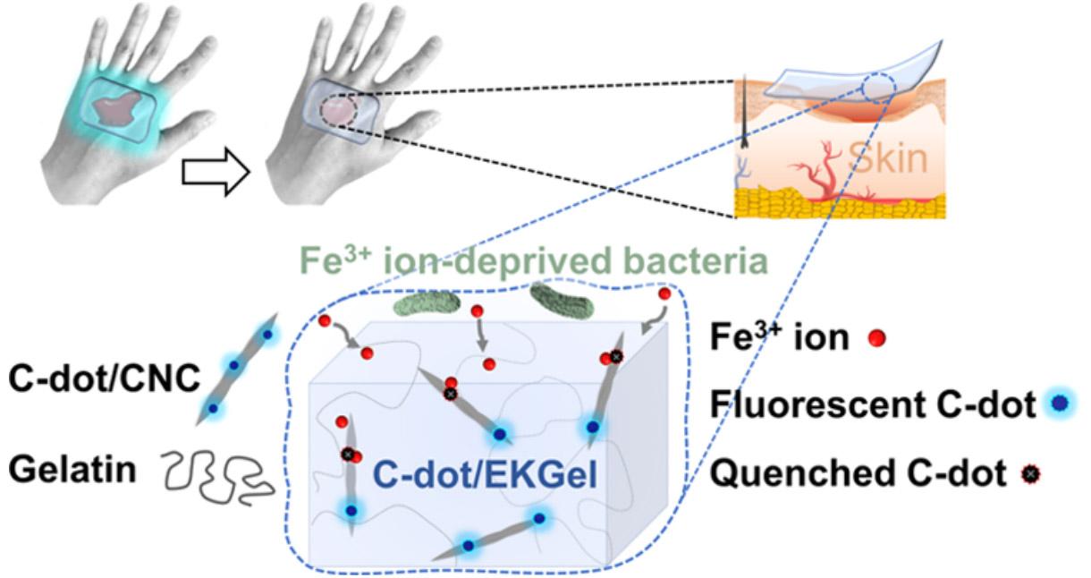 Повязка из нового материала может лишать бактерии питательной среды, неиспользуя антибиотики, исигнализировать свечением онеобходимости перевязки.