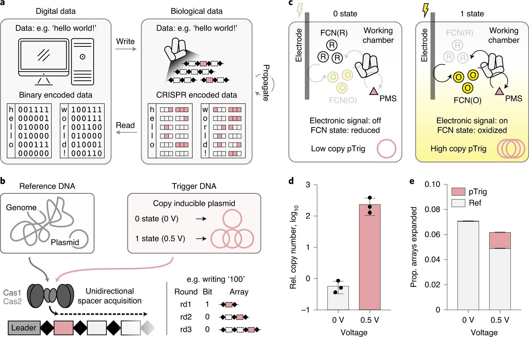 Прямое кодирование цифровой информации вДНК клеток. <a href=https://www.nature.com/articles/s41589-020-00711-4>S.Yim, <i>Nat Chem Biol</i> (2021)</a>.