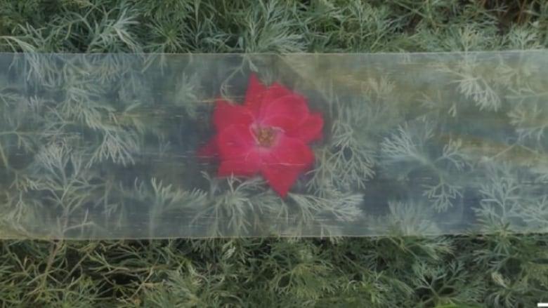 Цветок за прозрачной деревянной пластиной
