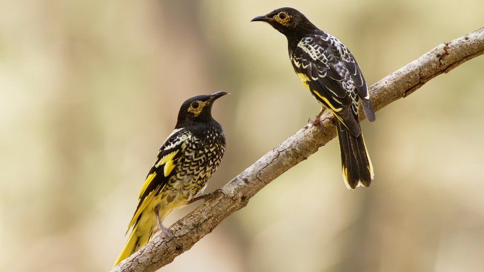 Птицы используют песни, чтобы найти партнёра иобозначить территорию.