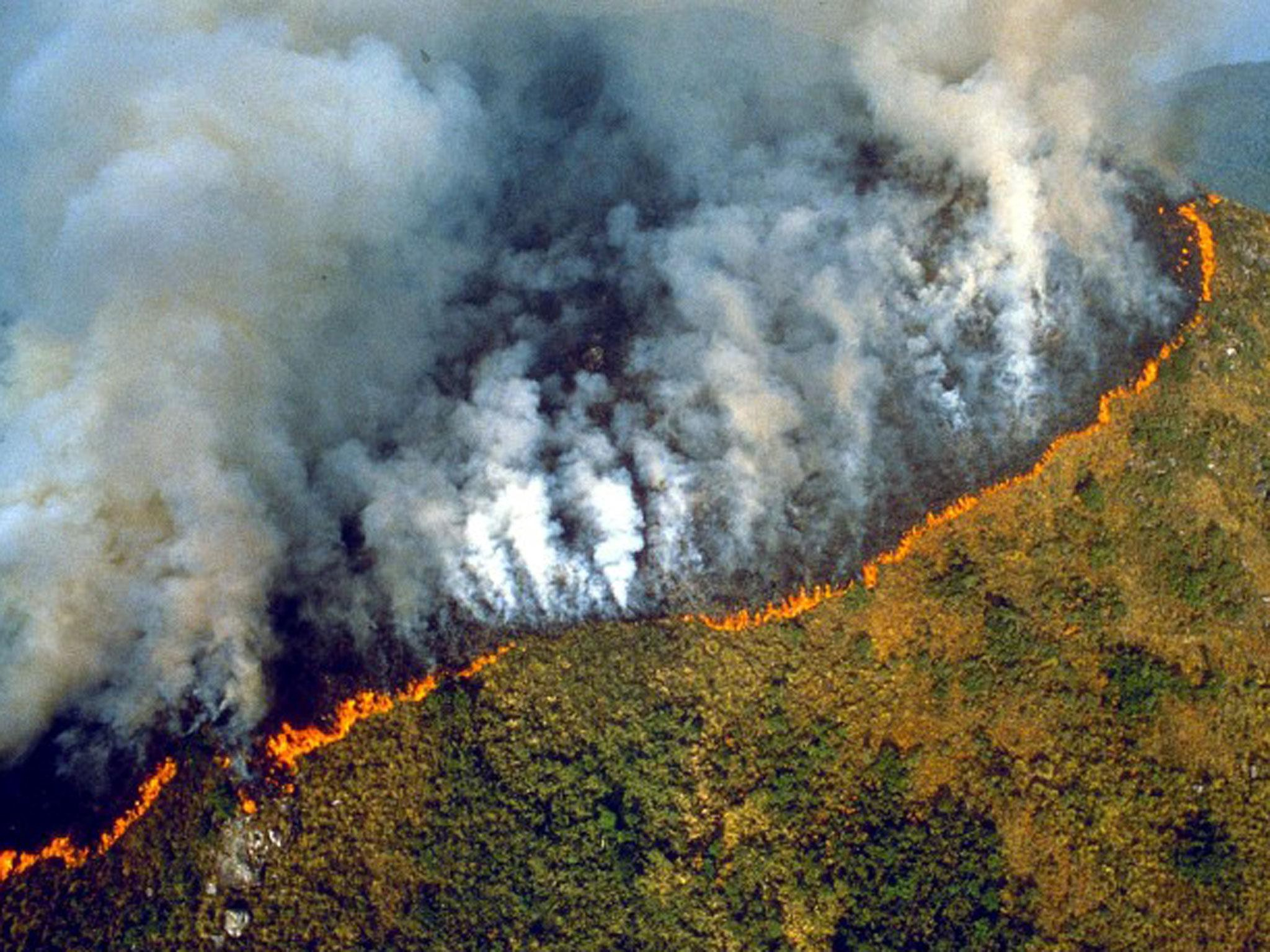 Ежегодные лесные пожары наносят огромный вред целым эоксистемам.