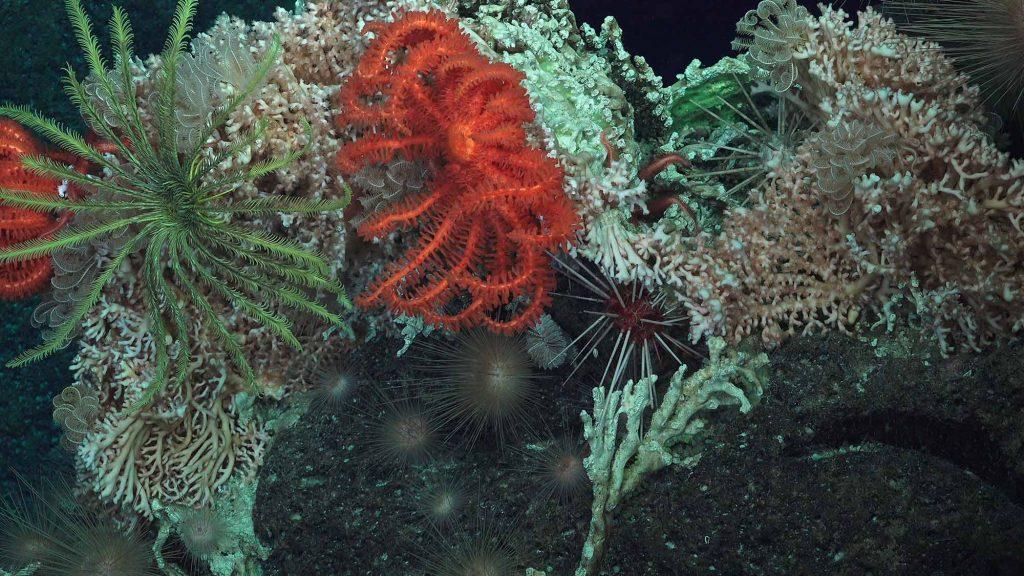 Ещё один коралл