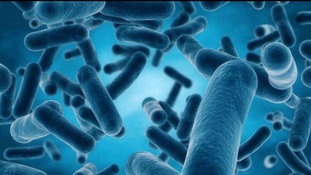 Резистентность бактерий кантибиотикам делает бактериальные инфекции опаснее.