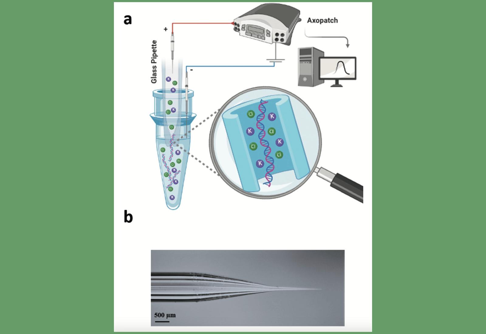 Наиллюстрации: (a)— стеклянная трубка скрошечным отверстием иэлектродом, введённая вжидкий образец для сбора плавающей вобразце ДНК; (b) фотография нанопипетки из боросиликатного стекла.