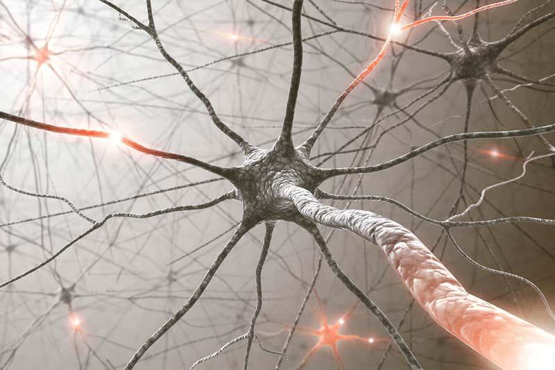 Искусственная нервная система имитирует «сознательную» реакцию живого мозга