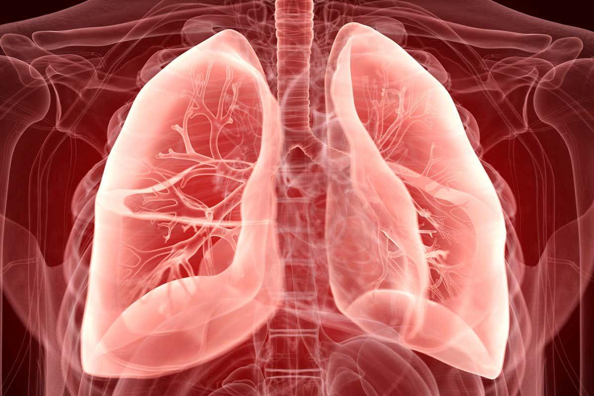 Установлен цитокин, ответственный за повреждение лёгких при COVID-19