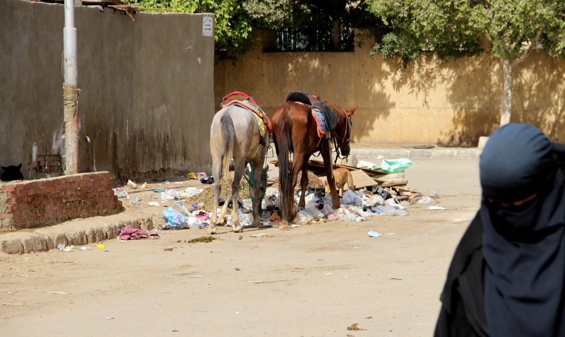 Ещё лошади иещё мусор