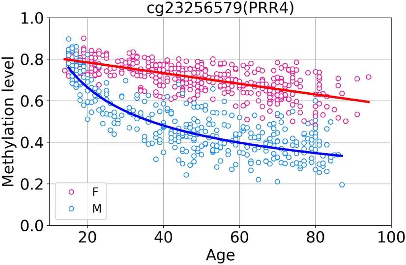 Выявленные висследованном наборе данных закономерности связанного свозрастом метилирования для одного из CpG-сайтов умужчин (синяя линия) иженщин (красная линия).
