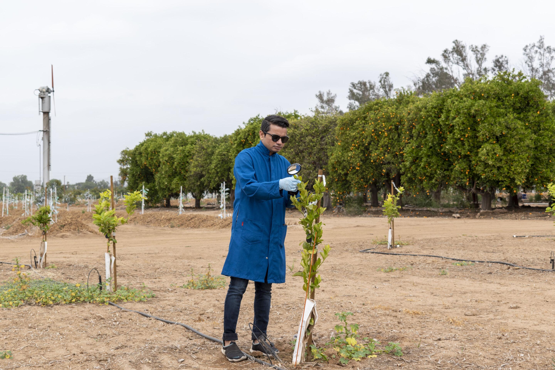 Новая технология может уберечь растения от губительных болезней иповысить их урожайность.