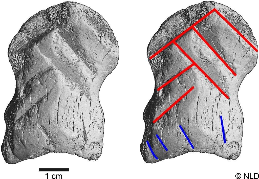 Археологи определили, что этому артефакту неменее 51 тысячи лет. То есть он изготовлен раньше, чем <i>Homo sapiens</i> прибыли вЕвропу.