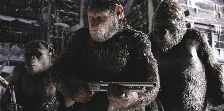 Шимпанзе игориллы вместе сражаются за общее дело. Кадр из кинофраншизы «Планета обезьян». Вреальности всё несколько иначе.