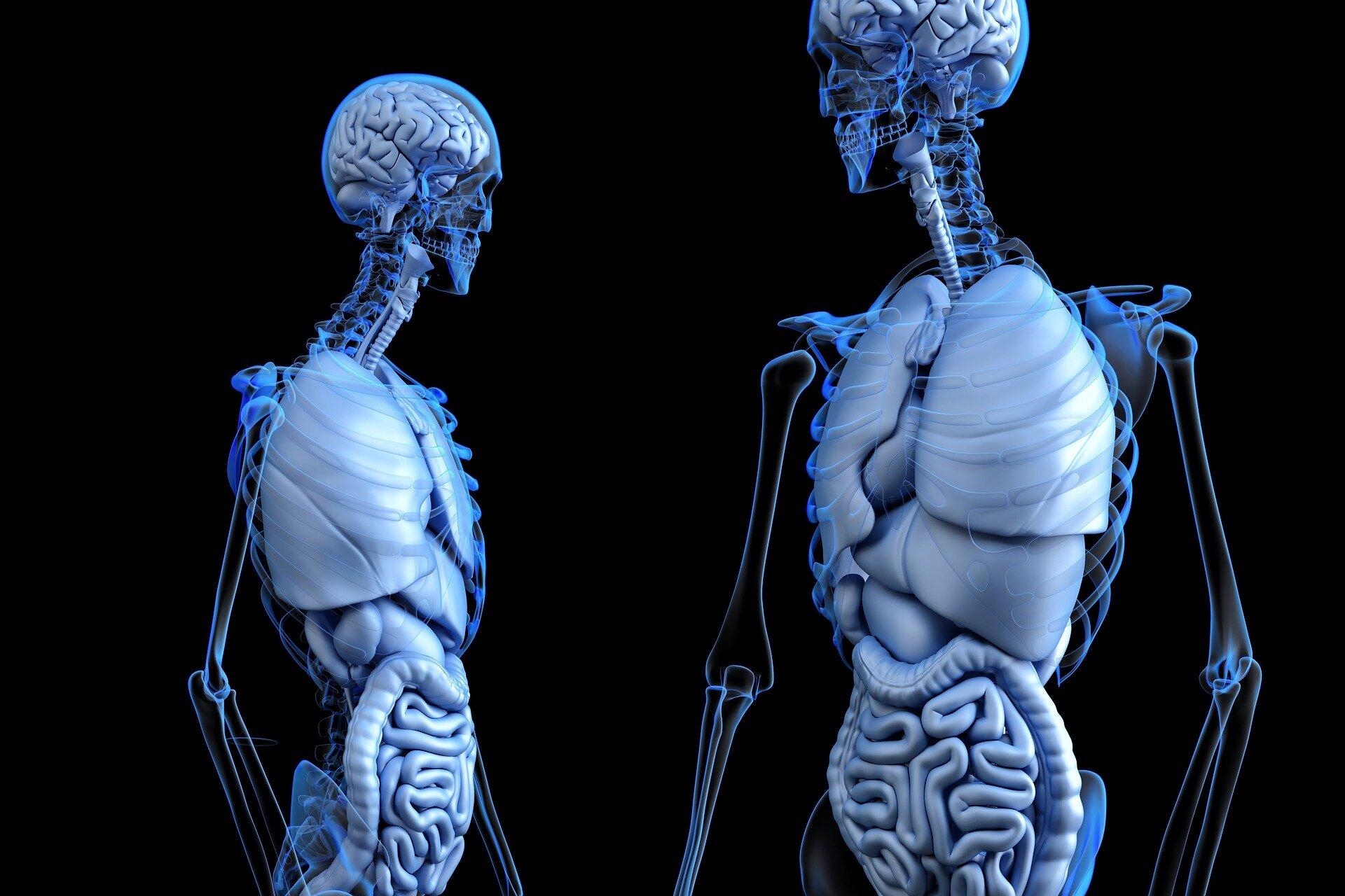 Новый имплантат способствует гораздо более быстрому икачественному заживлению кости.