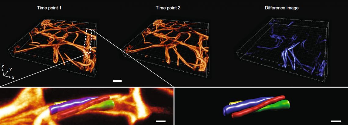 Рисунок 1. Изображения, полученные новым методом флуоресцентной микроскопии