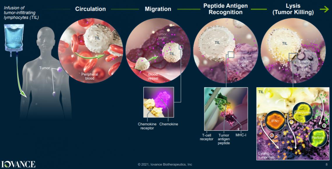 Механизм действия опухоль-инфильтрующих лимфоцитов (TILs) компании Iovance