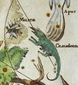 Chamaeleon constellation from Atlas Coelestis