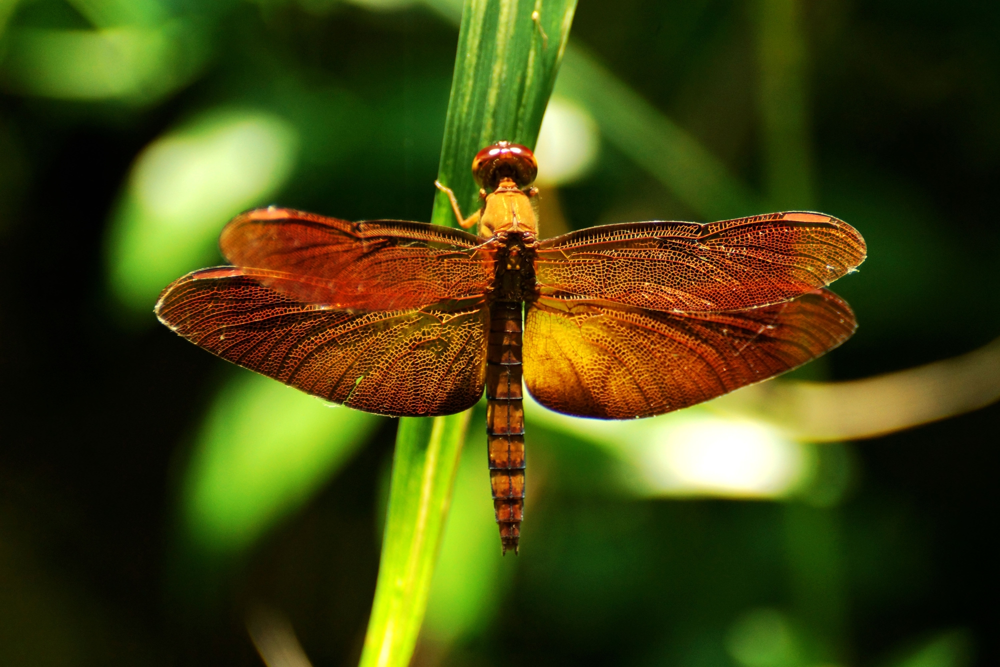 Изменения климата меняют иповедение насекомых, заставляя их менять привычные ареалы обитания.