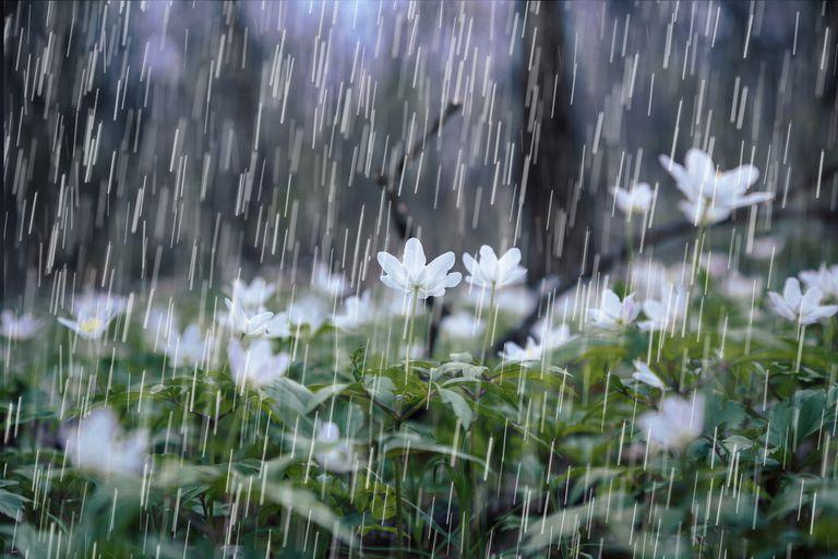 Дождевая вода может содержать микробы, полезные (или вредные) для растений.