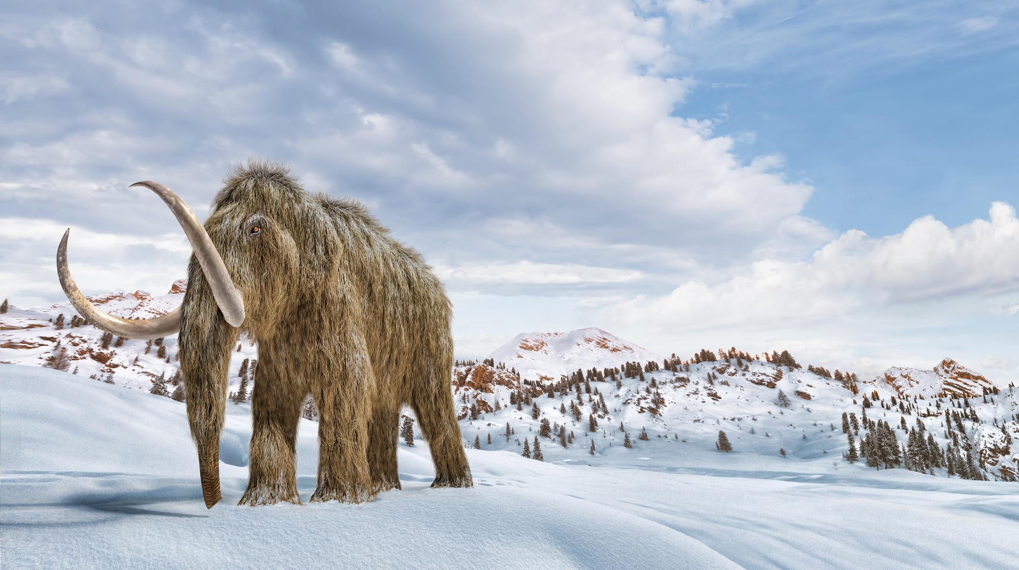 Согласно исследованиям, экосистема тундры стала гораздо менее продуктивна после того, как из неё исчезли крупные животные.
