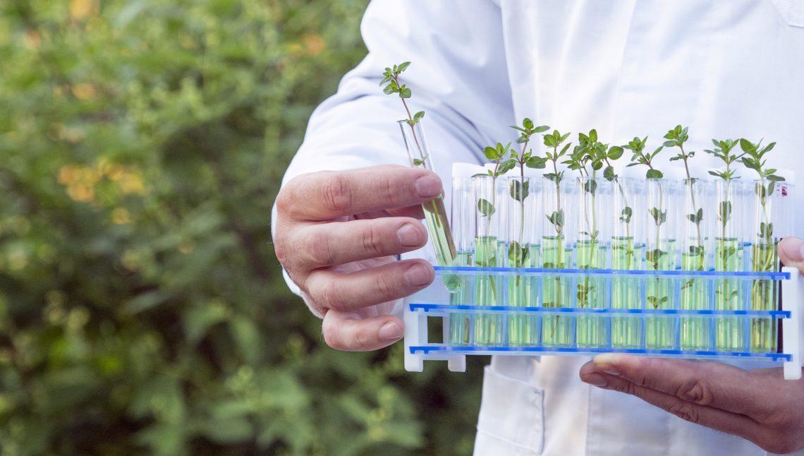 Великобритания даёт дорогу генномодифицированным продуктам